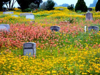 Coucou du vendredi haïku, senryû, au beau pays des fleurs...