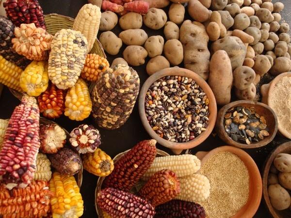 diversite semences