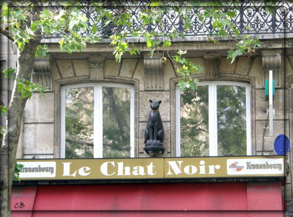 Paris le chat noir