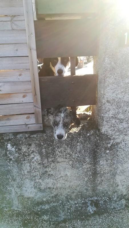 Les chiens des voisins