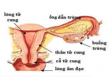 Viêm vòi trứng và biểu hiện rõ nhất của viêm vòi trứng
