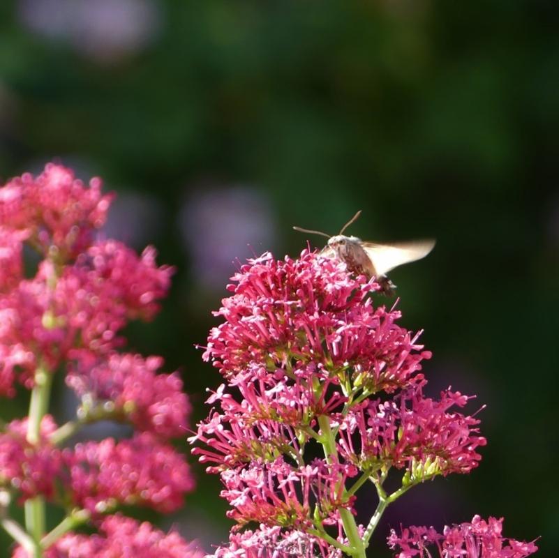 Impression papillon soleil couchant...