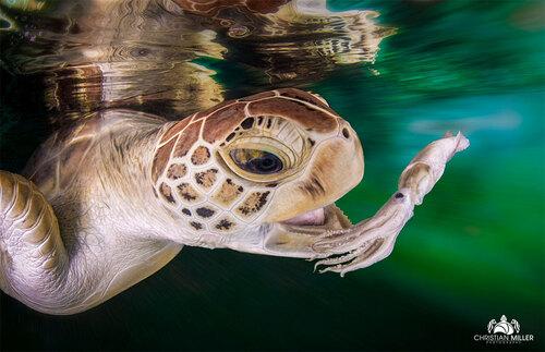 Nagez au plus près des tortues à travers ces clichés étonnants qui ressemblent à des peintures surréalistes