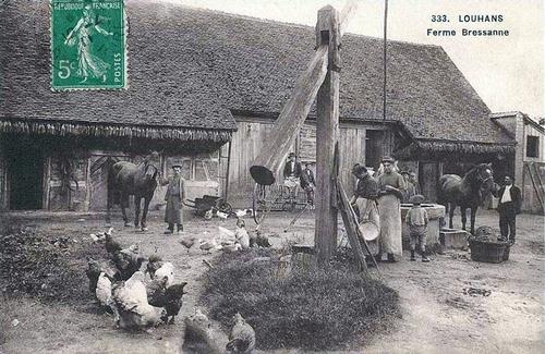 06 - Les poules dans les cartes postales