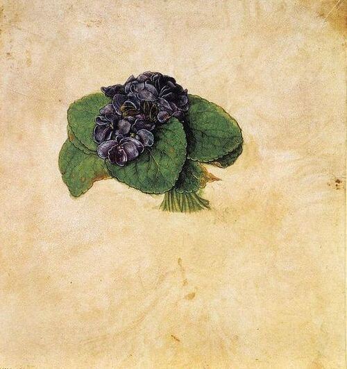 Bouquets champêtres, suite, les violettes de Dürer