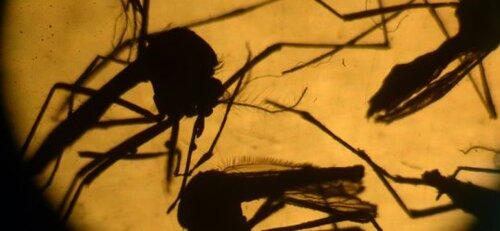 Virus Zika (2)