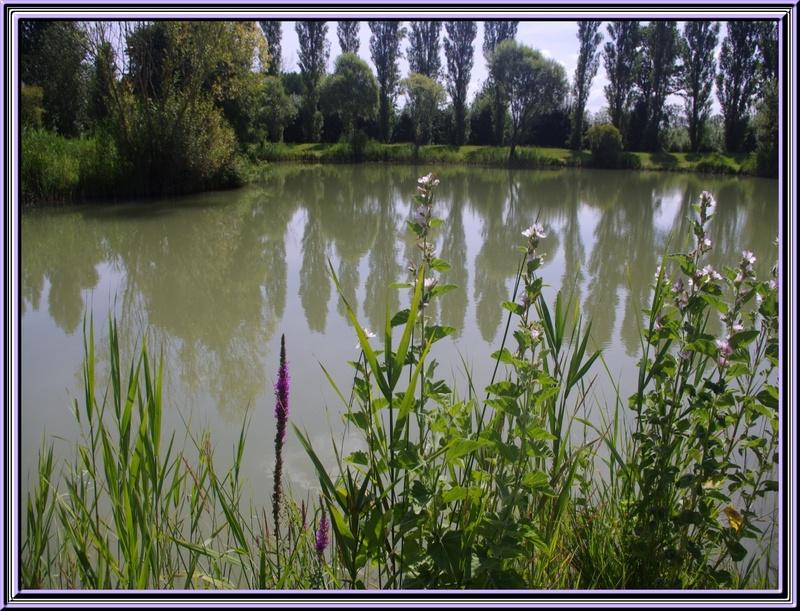 Dimanche 22 juillet 2012 pique-nique à Nuallé d'Aunis  (près de La Rochelle)