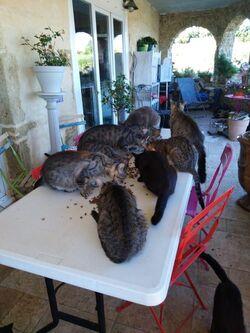 SOS Chats sur le Pouget 34