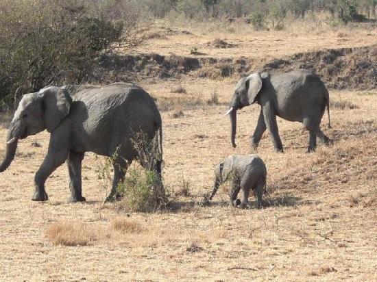 masai-mara-national-reserve.jpg1.jpg