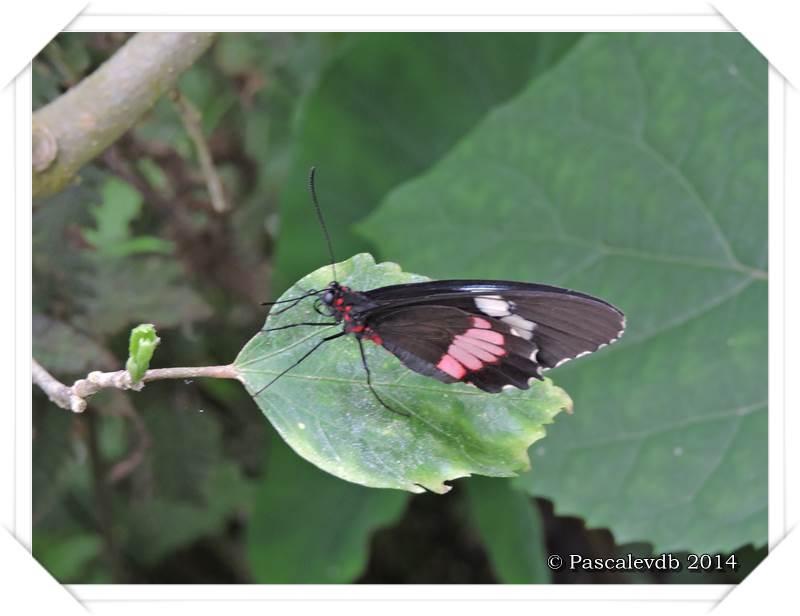 Le Paradis du Papillon à Sanguinet - 6/10