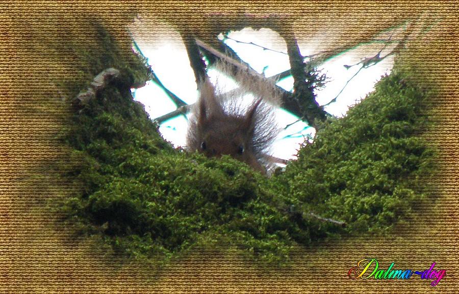 un écureuil au mois de janvier