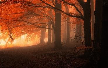 La forêt au crépuscule ...