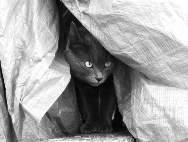 Partie de cache cache