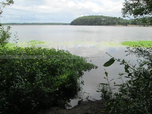 Promenade vers le lac et la dune de Mimizan-Aureilhan