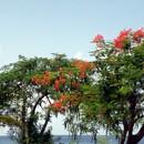 Sur la côte Caraïbe, à la hauteur de l'Habitation... - Photo : Bobnad (Août 2014)