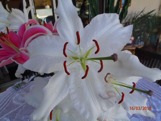 Quelques fleurs pour un bon week-end
