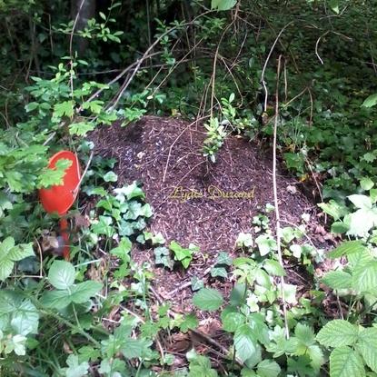 Fourmilière de fourmis noires