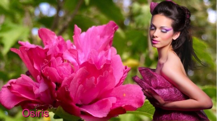 Sur fond d'hibiscus double de mon jardin !