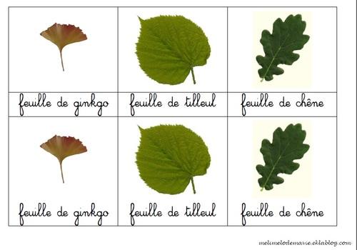 cartes classifiées feuilles