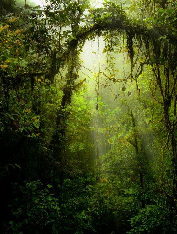 Les plus belles forets du monde foret tropicale: