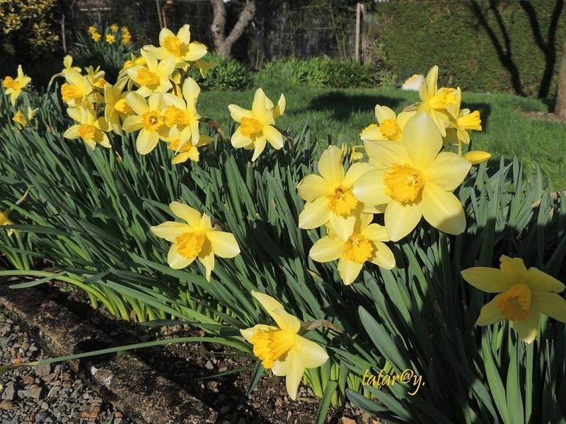 Fleurs du printemps ....