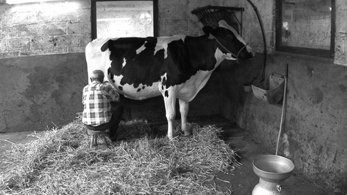 07 - La traite des vaches