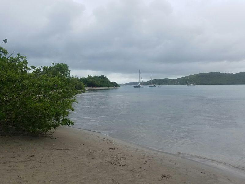 Petit sentier mangrove de la presqu'île de la Caravelle