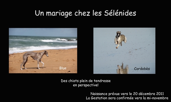 mariage blue et cordo octobre 2011