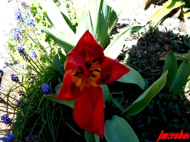 Que fait on au jardin en ce mois d'avril?