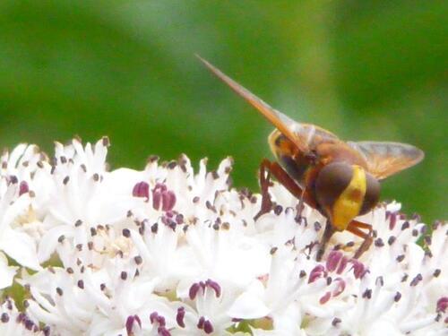 29 août les insectes