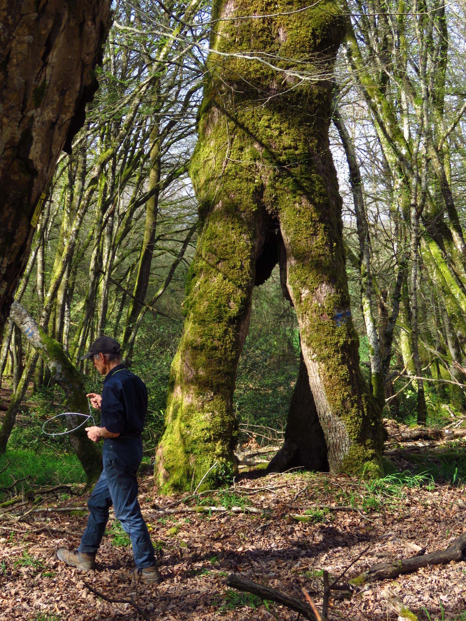 Le chêne et la foudre
