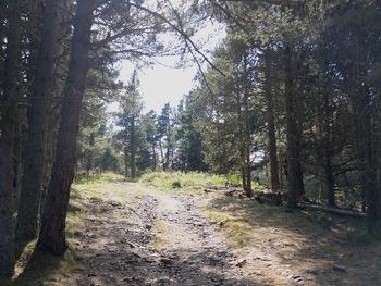 Montée vers la route forestière