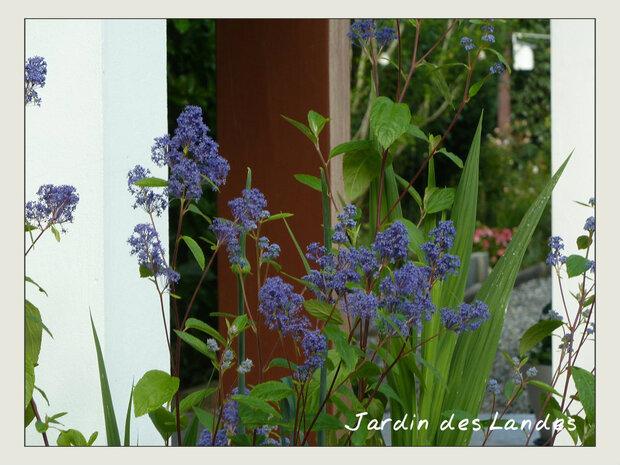Début Juillet au jardin.