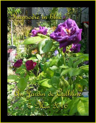 Jardiner avec la lune du 11 au 20 Mai