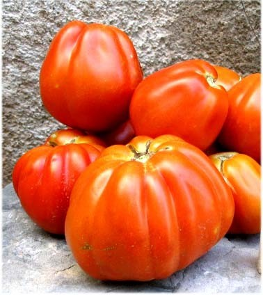 tomates-mures.jpg