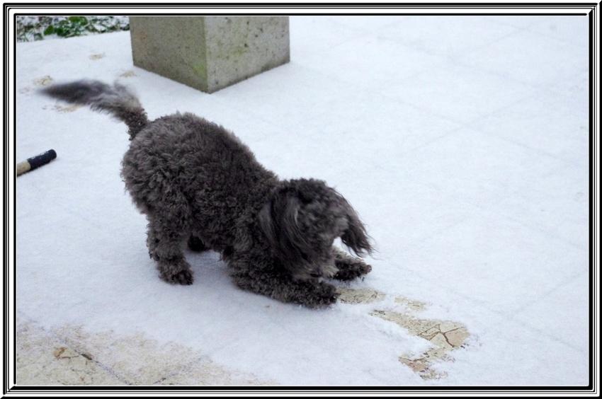 Vendredi dernier ,nous étions en alerte ...........neige.......