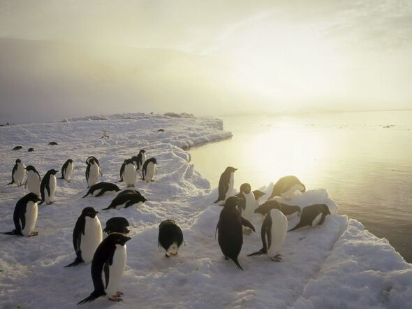 L'Antarctique, le plus grand sanctuaire du monde