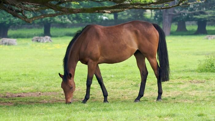 10 images de chevaux