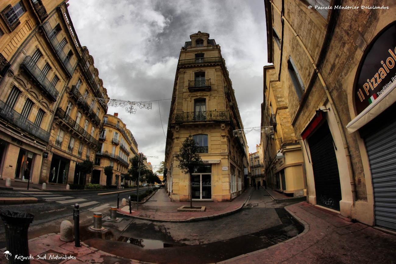 Montpellier Intra-Muros