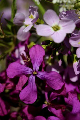Un bouquet pour Liliane