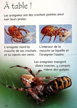 Les araignées 4