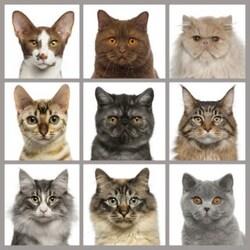Les chats...Leur Histoire /part 3/