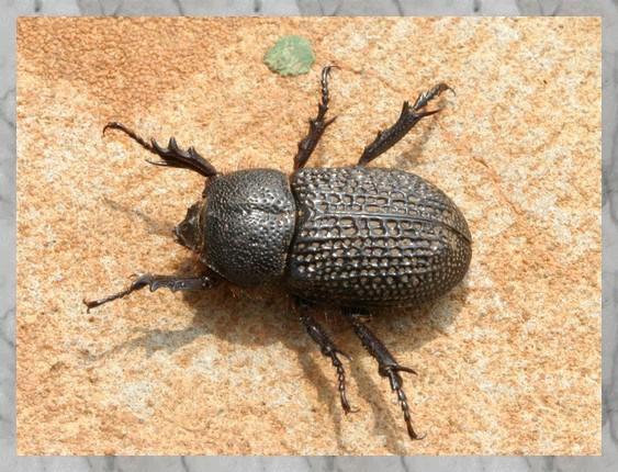 insectes du katanga
