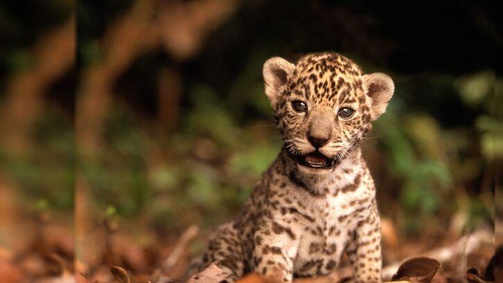 Articles/Photos sur les animaux - 3 - 15 images d'animaux