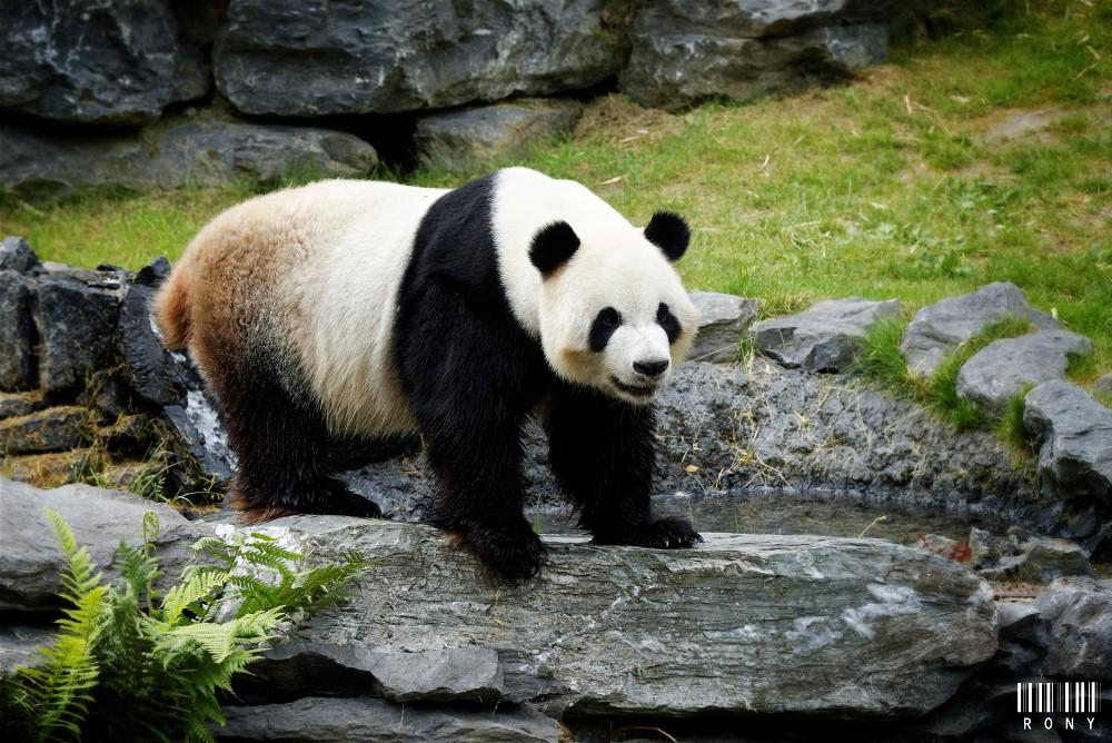 Quelques photos de Xing Hui