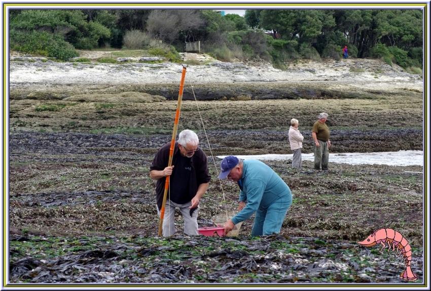 La pêche à la crevette