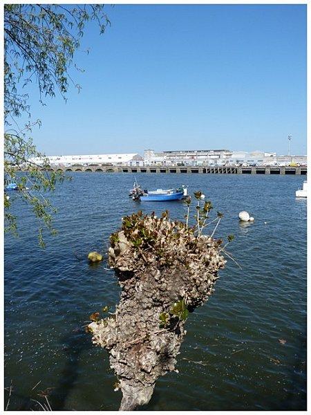 arbre--bateau.jpg