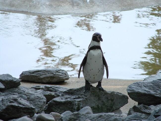 Zoo de Beauval.