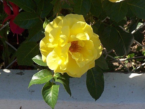 fleurs001
