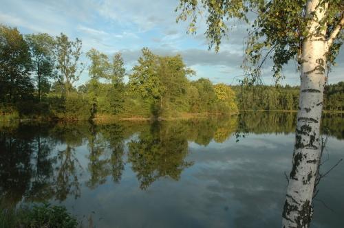 lac et forêt en Bohème du Sud